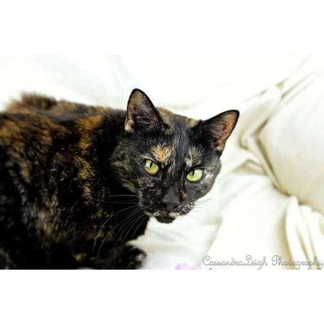 Photo of Heidi ***Only Pet Household***