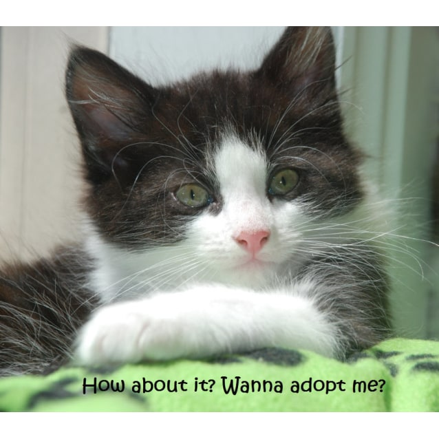 Photo of Steele~Confident *Adoption Pending*
