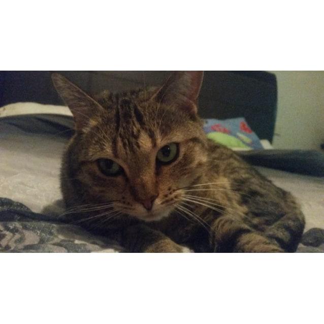Photo of Bastet (Bassy) | $50 Adoption Fee