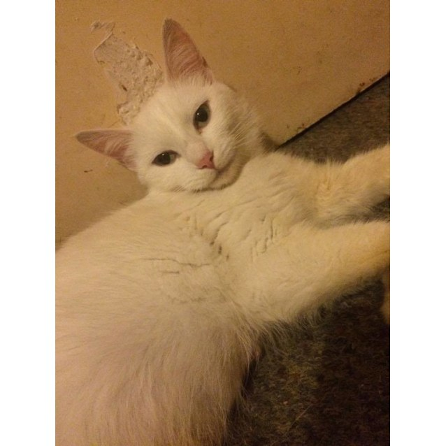 Photo of Polar! A Purry And Chatty Delight!