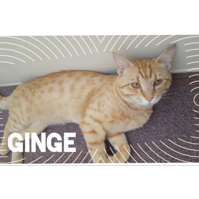 Photo of Ginge