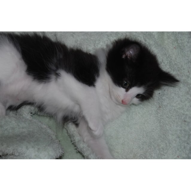 Photo of Jesse~Sweet And Quiet *Adoption Pending*