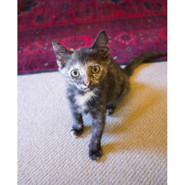 Photo of Skylah