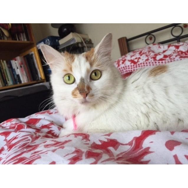 Photo of Ilythia Aka Illy