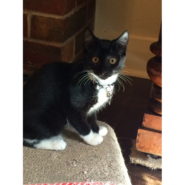 Photo of Scarlett (Located In Thornbury)