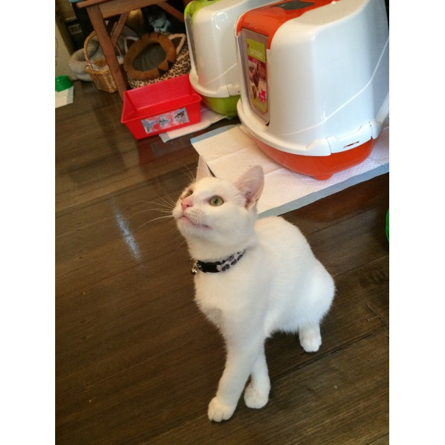 Photo of Smudge (Snuggler Loves Kids, Located In Eltham)