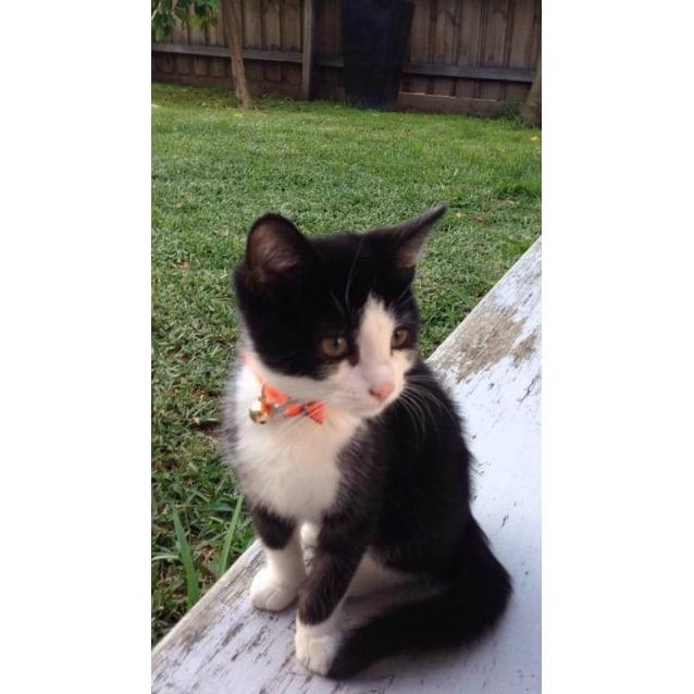 Photo of Figaro (Located In Coburg)