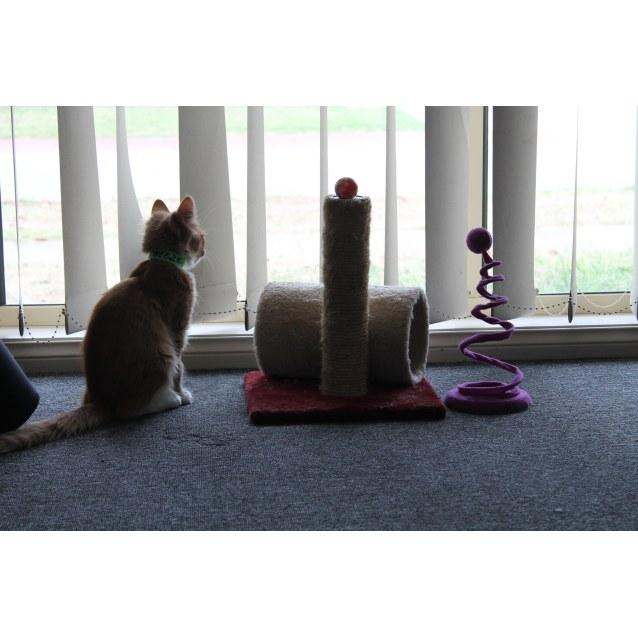 Photo of Cheezel & Twistie (Kitten Brothers)
