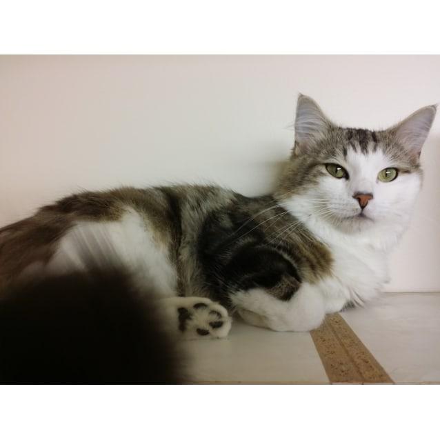 Photo of Pepi