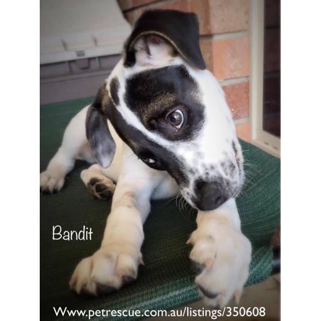 Photo of Bandit