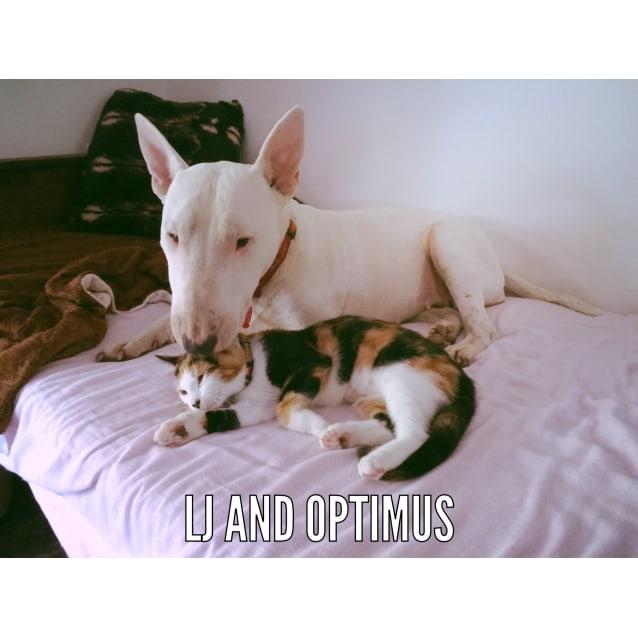 Photo of Optimus (Dog Friendly)