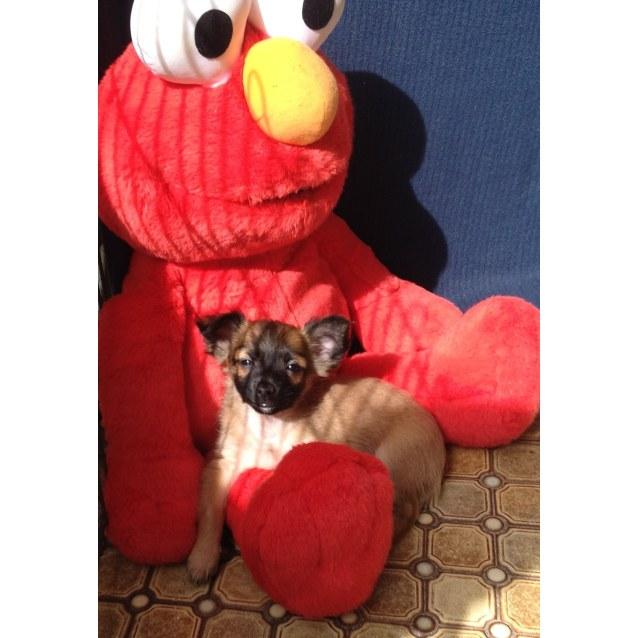 Photo of Dougi