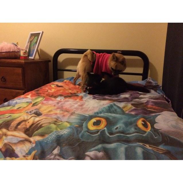 Photo of Licorice (Dog Friendly)
