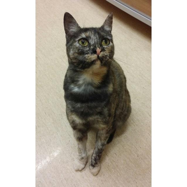 Photo of Monique 'possum'