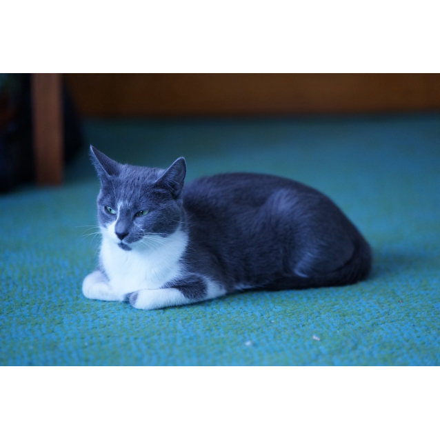 Photo of Little Miss Truffle