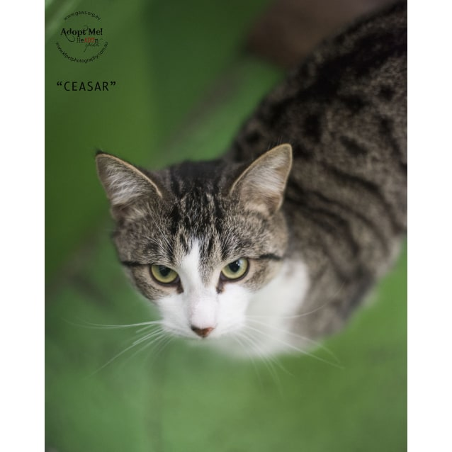 Photo of Ceasar Id25968 $50 Adoption Fee!
