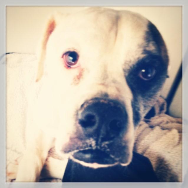 Photo of Geronimo