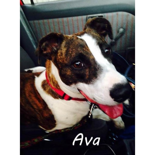 Photo of Ava (Located In Eltham North)
