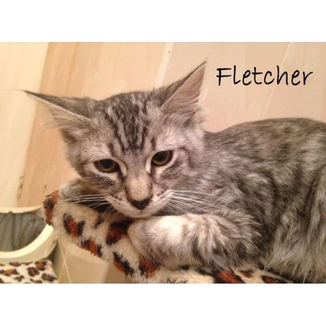 Photo of Fletcher (Located In Newport)