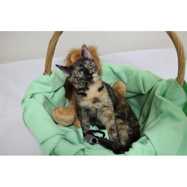 Photo of Lovebug Ember Is Looking For A Home