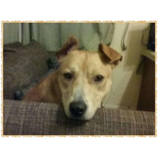 Photo of Rocco ** A Delightful Boy **