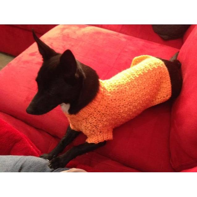 Isabel Small Female Chihuahua X Kelpie Mix Dog In Wa Petrescue