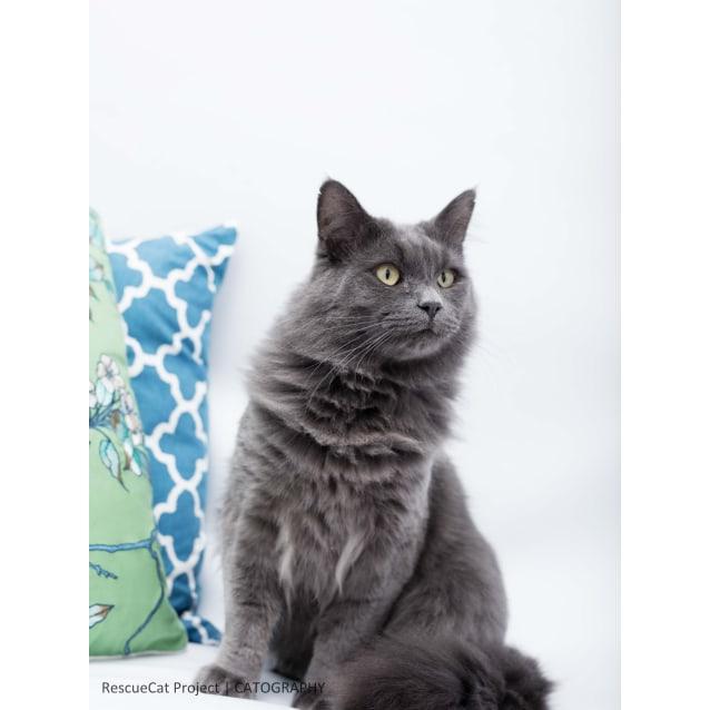 Photo of Grey Bear