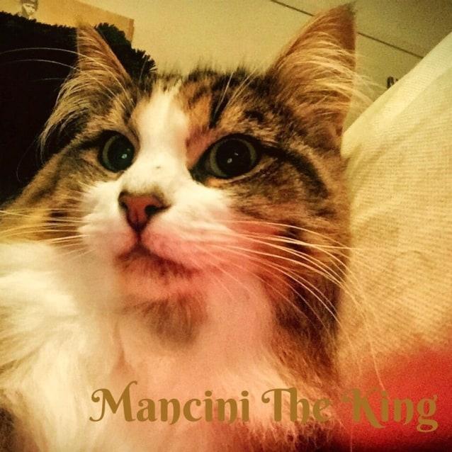 Photo of Mancini The King *Dog Friendly!*