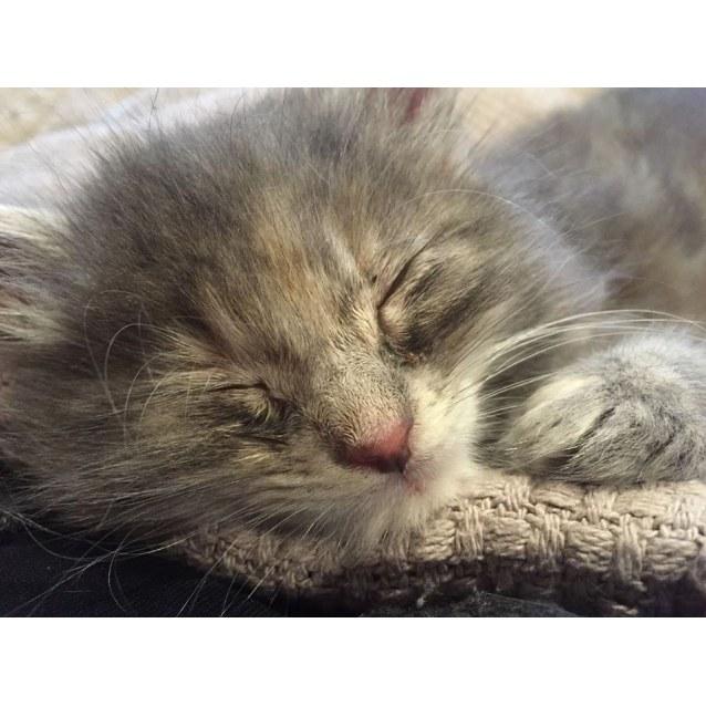 Photo of Madeline