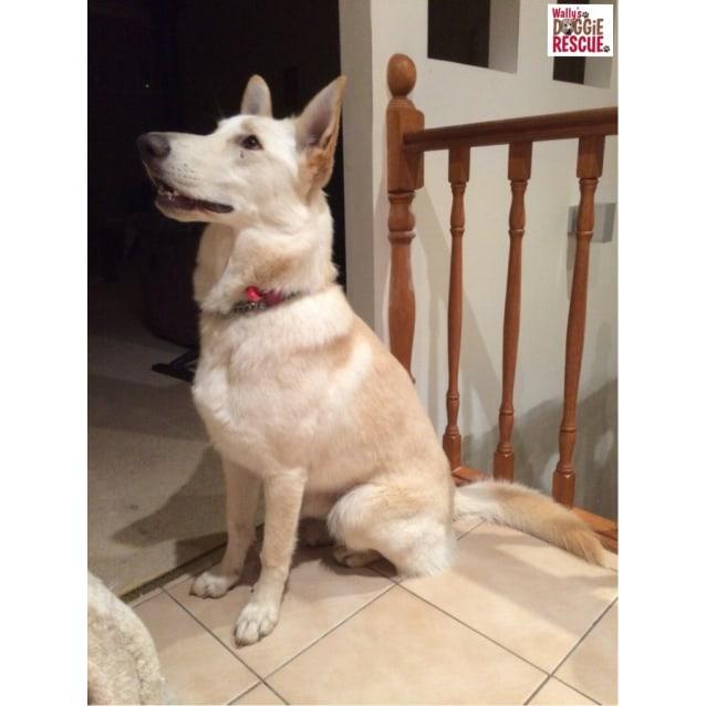 Photo of Layla (Cat/Child/Dog Friendly)