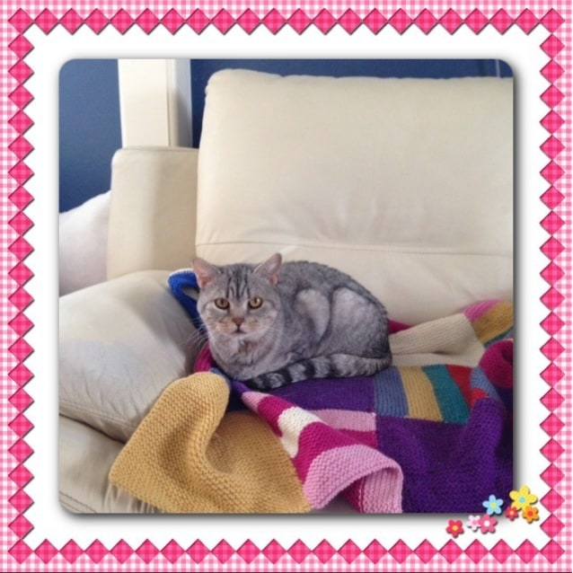 Photo of Adorable Amelia Is Trialling Her New Home!!