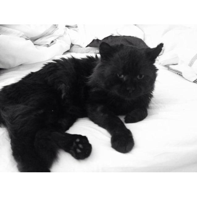 Photo of Salem The Bear Cat