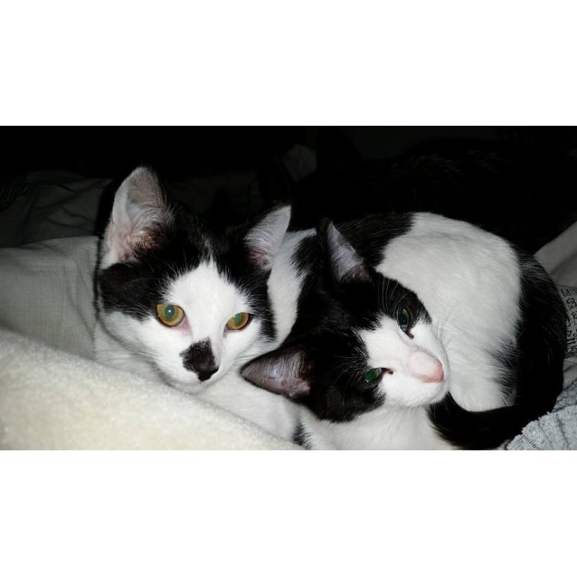 Photo of Orca & Oreo (Located In Bundoora)