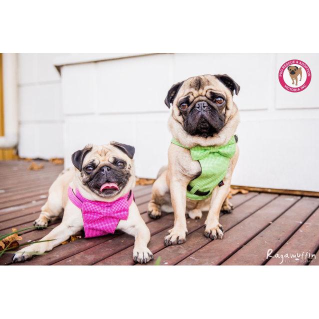 Photo of Ciccia & Bruno