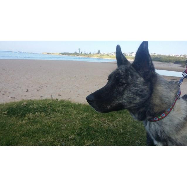 Photo of Roxi
