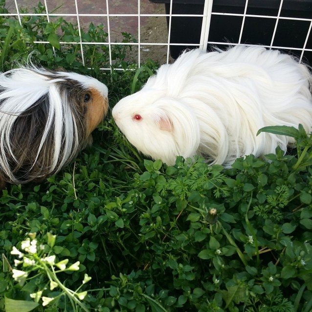 Photo of Fudgy And Ellie