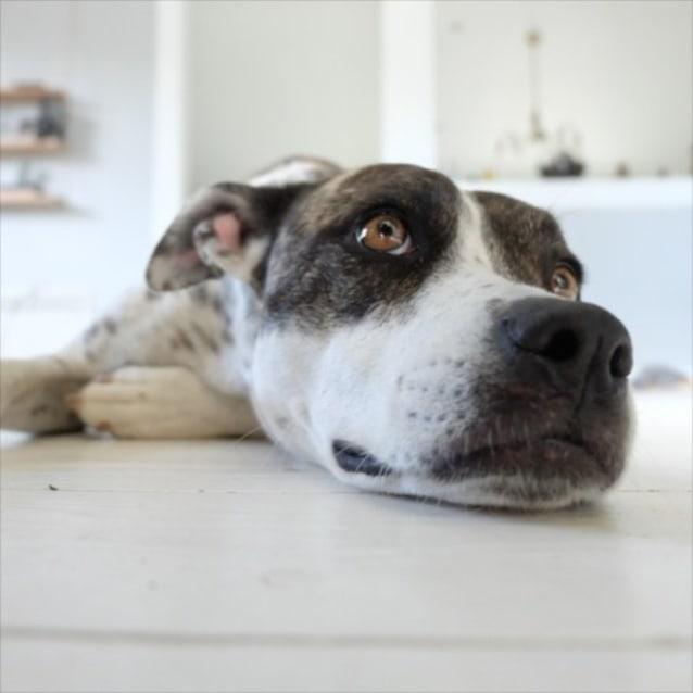 Photo of Lela