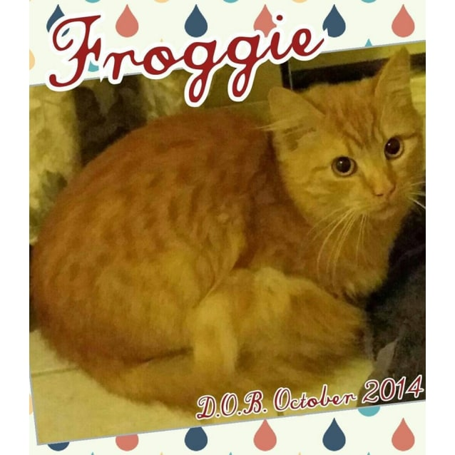 Photo of Froggy