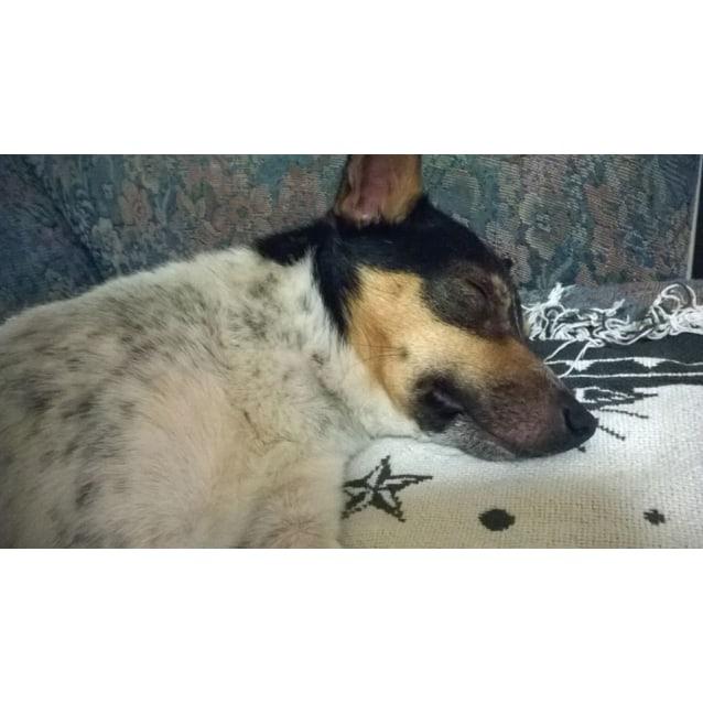 Photo of Eddie (Located In Watsonia)