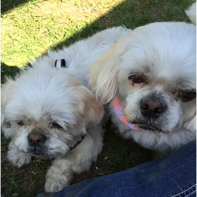 Photo of Lucy & Billy (Bonded Siblings)