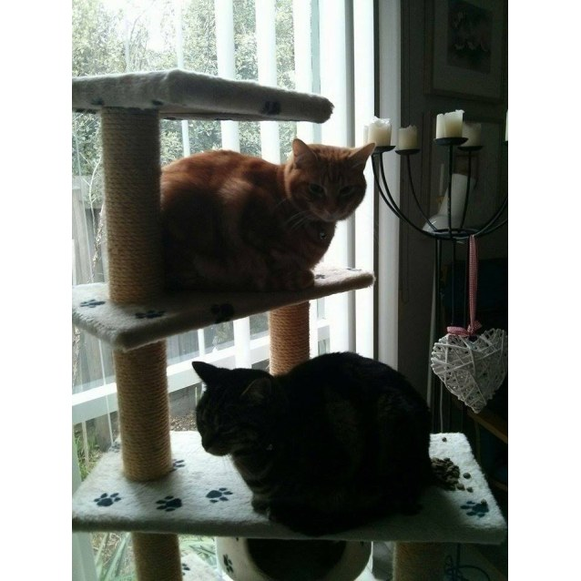 Photo of Tigger And Gidget The Inseperable Duo