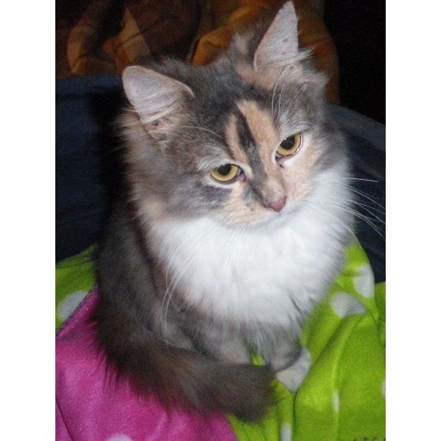 Photo of  Aniessa