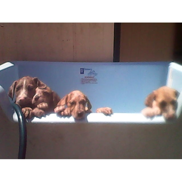 Photo of Pups 3 Girls 1 Boy