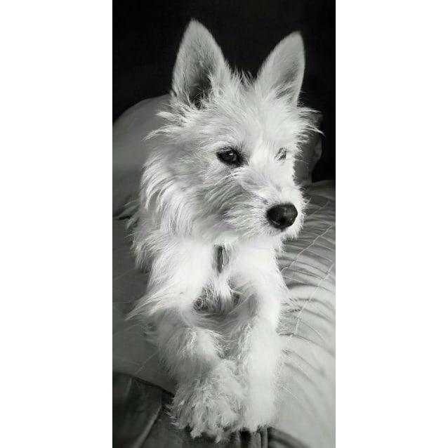 Photo of Asani