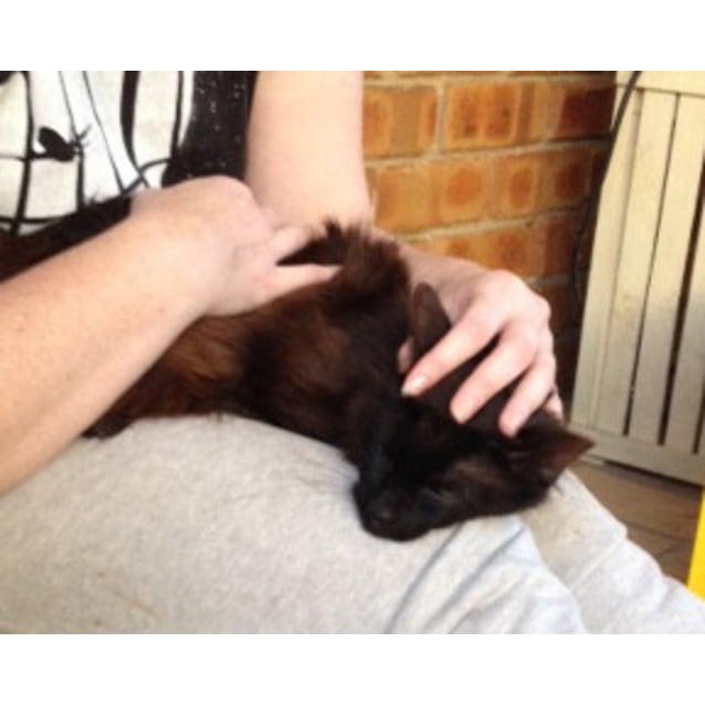 Photo of Tas (Located In Narre Warren) **$50 Adoption**