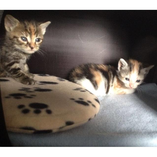 Photo of Yomi And Kagura (In Geelong)