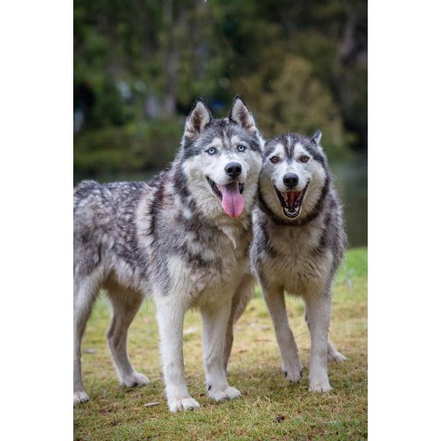 Photo of Ash & Doobie