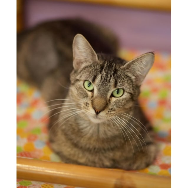 Photo of Buffy ($25 Adoption Fee)