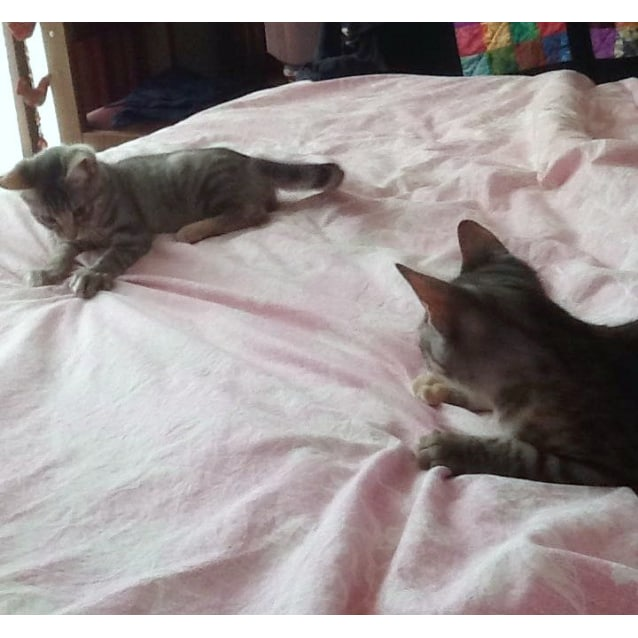 Photo of Eva & Nia   (Morwell) Adopt Us For Just $50!