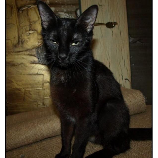 Photo of Midnight Adoption Fee $120
